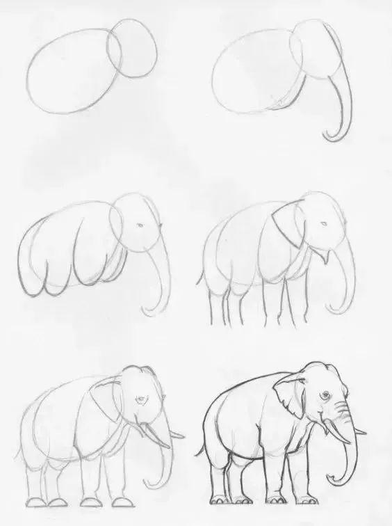 1000个动物绘画干货 够你画完这一年了